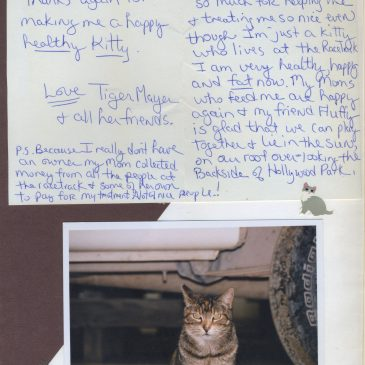"""Thanks for making me a happy, healthy kitty"""