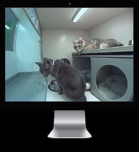 AVMI Updates Website and Improves iCat Webcams