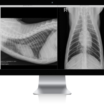 AVMI is the first small animal veterinary practice in California to add digital radiography