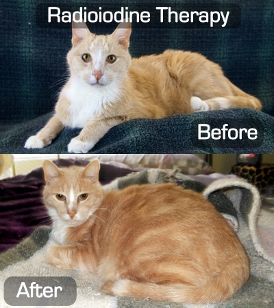Before and after radioiodine therapy